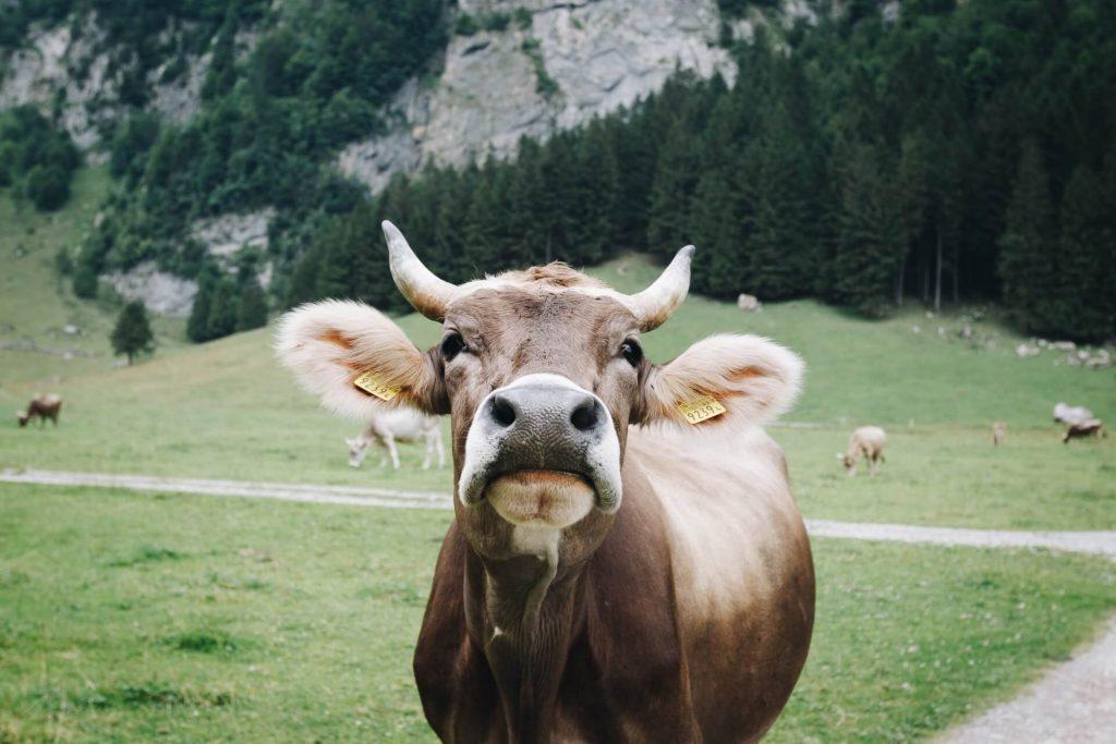 31 Essential Vegan Statistics for All Animal Lovers [2021] F1