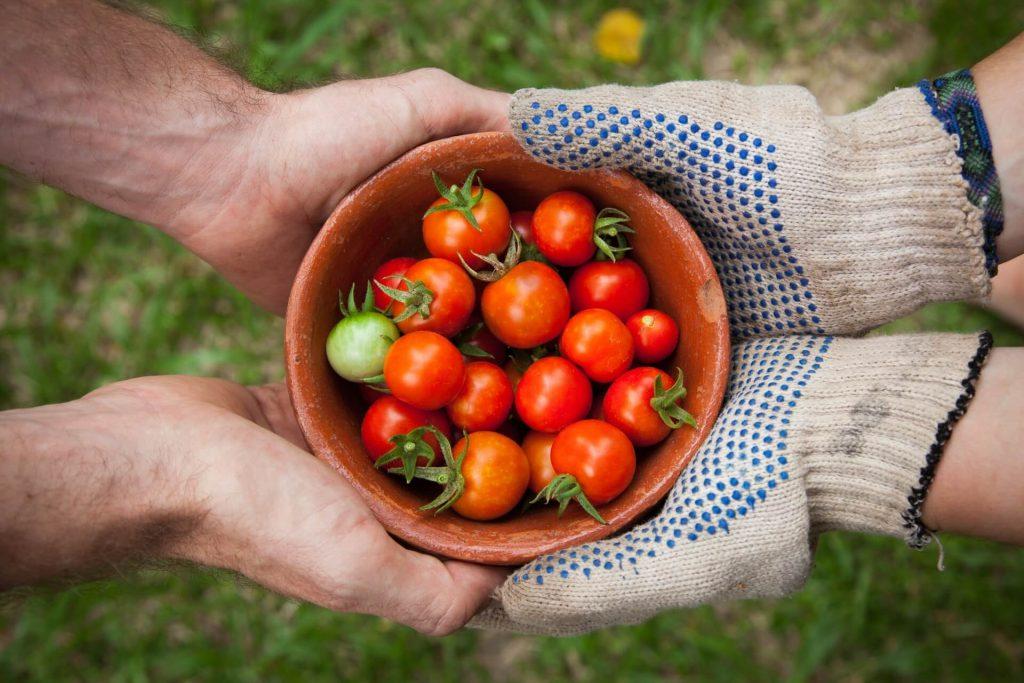 27 Organic Food Statistics Is It Really Healthier [2021 Update] F2