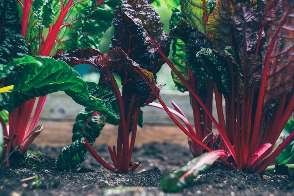 27 Organic Food Statistics Is It Really Healthier [2021 Update] F4